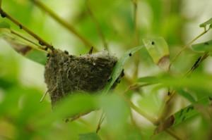 ハチドリの巣